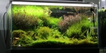 Aquascaping 1