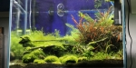 Aquascaping 2