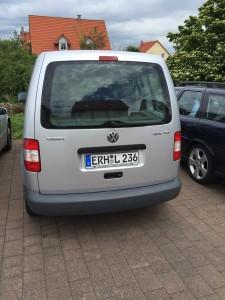 Der Volkswagen unter den Hypancistrus