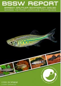 Titelseite BSSW-Report 3-2020: Devario aequipinnatus - Andreas TANKE