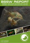 Titelseite BSSW-Report 1-2021: Corydoras aff. aeneus 'Carmen' aus Bolivien - Daniel KONN-VETTERLEIN